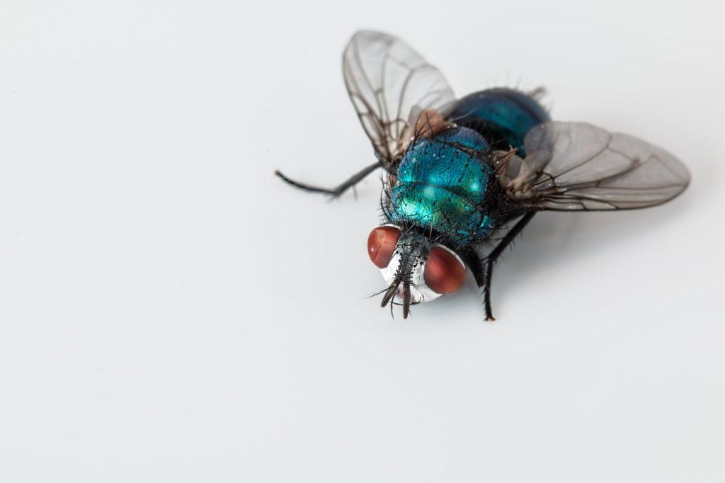 Fliege Schädlingsbekämpfung